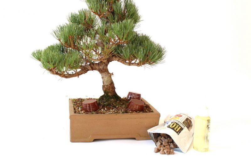 Fertilizante para bonsáis
